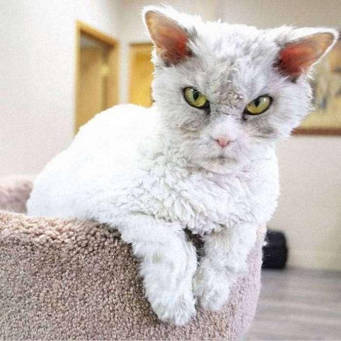 Альберт — самый злой кот интернета?