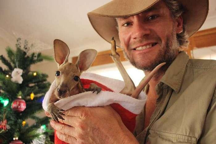 Маленькие кенгурята остаются умирать в сумке погибшей матери, пока не приходит он…