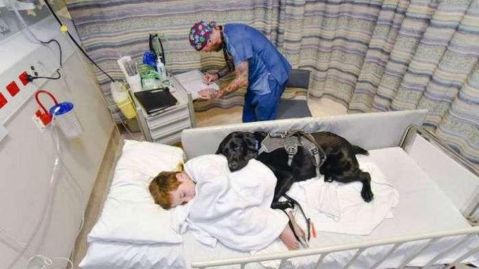 Мальчику с аутизмом может помочь только его друг — собака