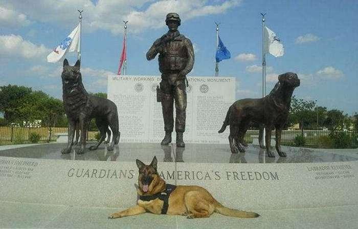 Собаку, потерявшую лапу во время службы в Афганистане, наградили медалью