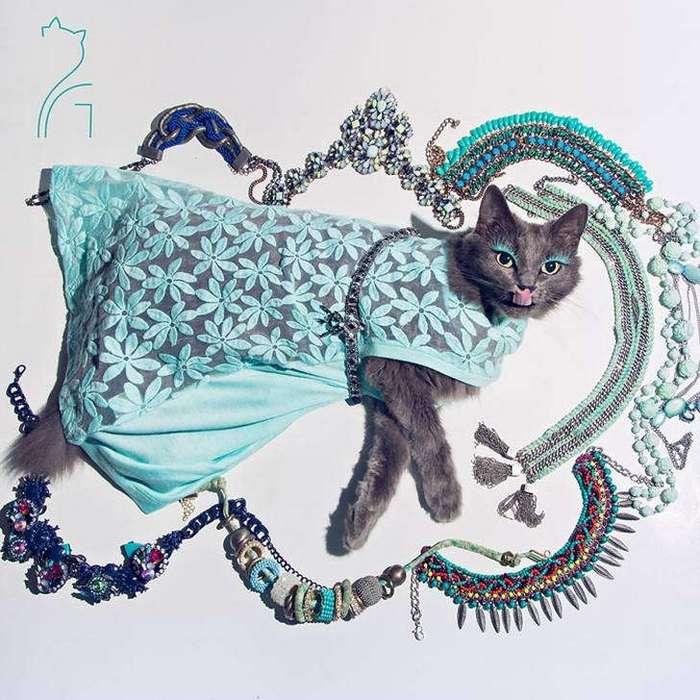 Гламур как стиль жизни: кошка в ярких нарядах завоевывает инстаграм