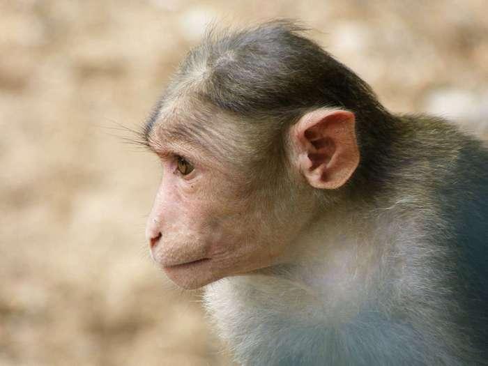 Съеденные заживо: 10 животных, которых употребляют не умерщвлёнными