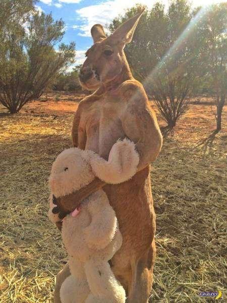 А там временем в Австралии - 1