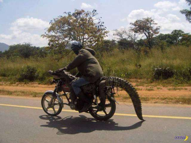А тем временем в Африке - 4