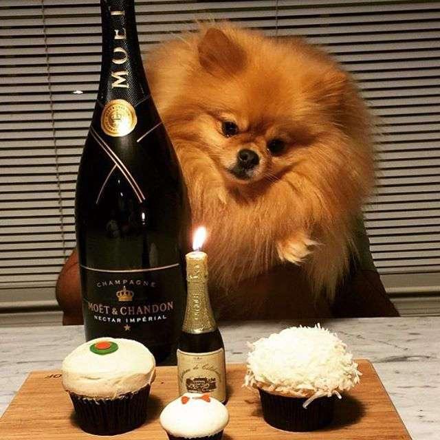 А вот и богатенькие собачки Лондона, которые живут лучше большинства людей