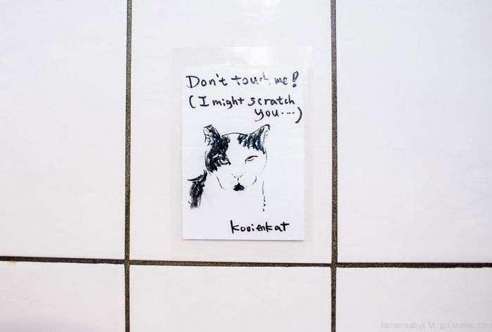 Амстердам: приют для кошек на барже