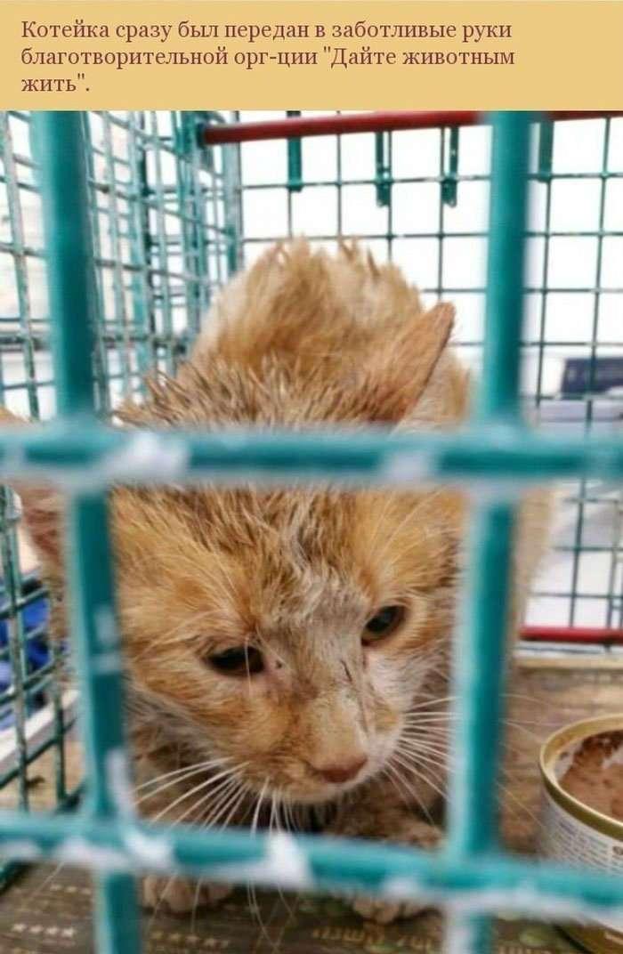 Спасение застрявшей в трубе кошки