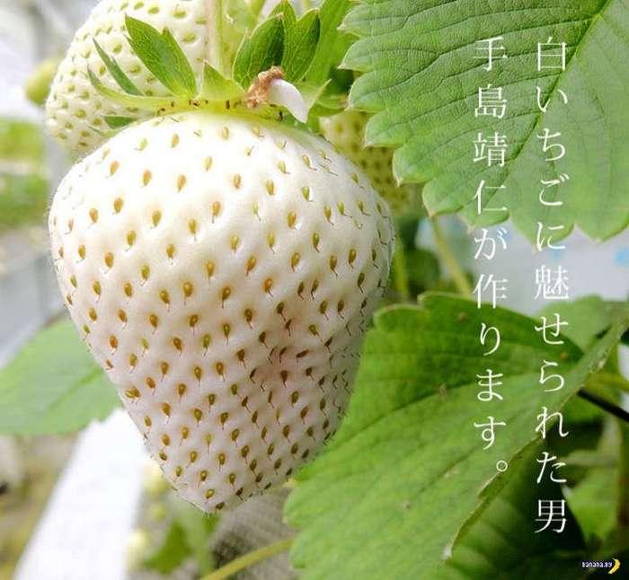 Белая клубника из Японии
