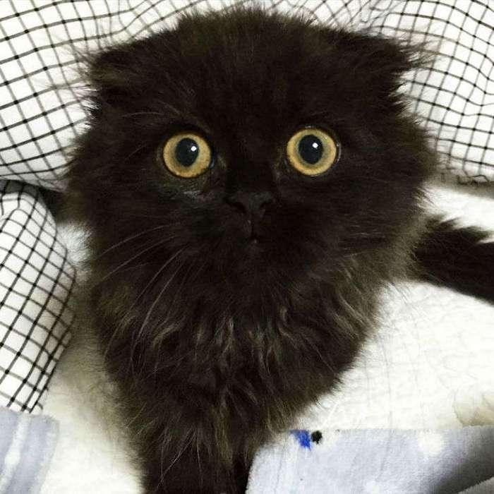Котик Гимо, который всегда в шоке