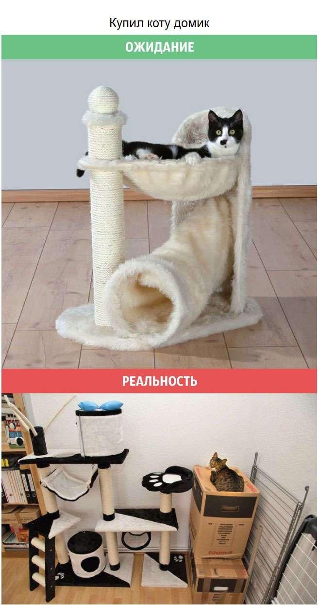Кошки: ожидания и реальность