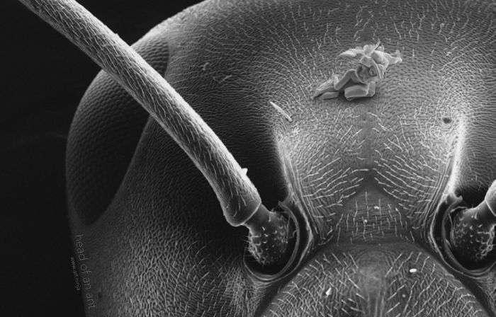 Микроскульптуры, которые не видны невооруженным глазом