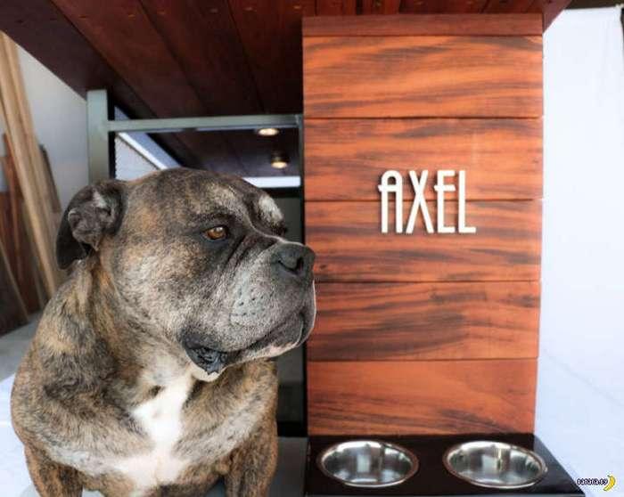 Дизайнерская будка для собаки