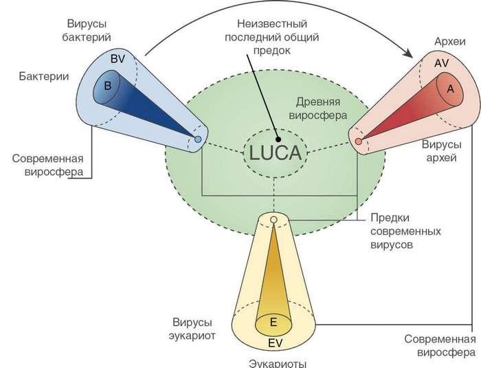 Пять главных загадок биологии
