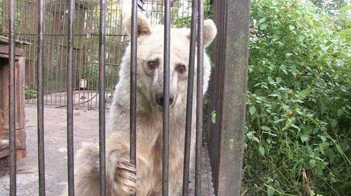 Эта медведица 30 лет ждала спасения