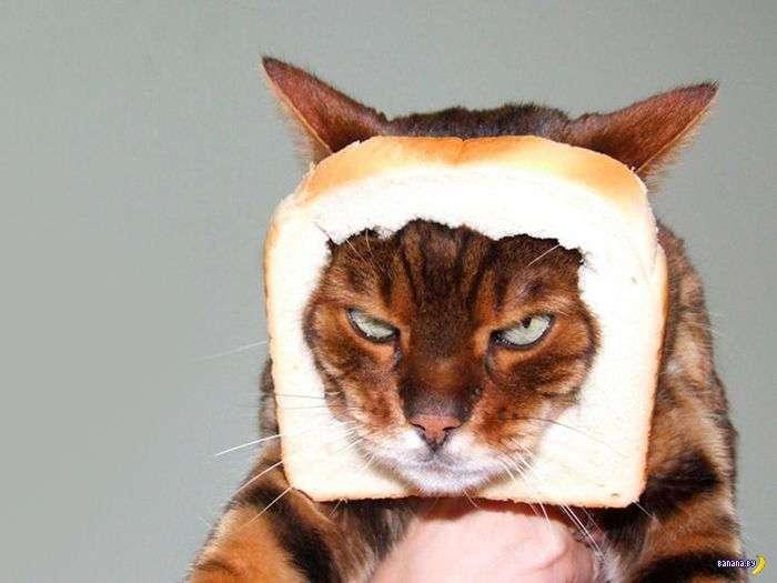 Эти коты хотят чтобы ты умер