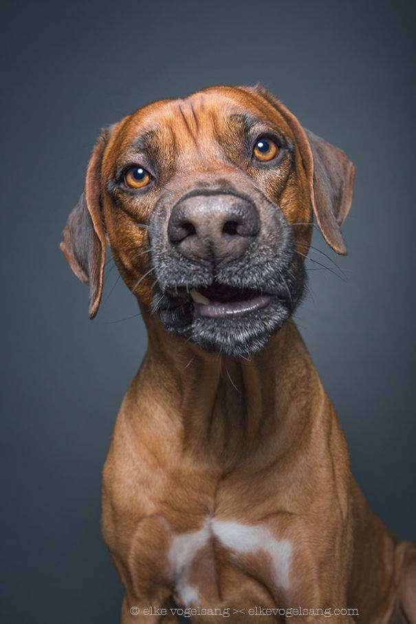 Эти выразительные собачьи морды