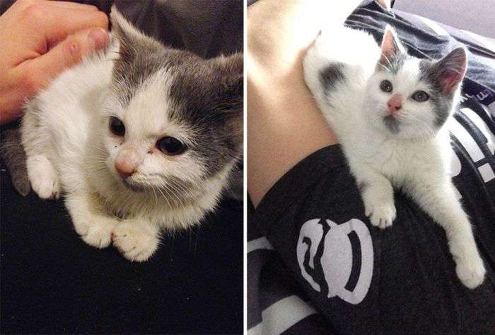 Животные в приюте и в семье: фото до и после