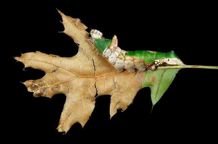 Гусеницы: какие они вблизи