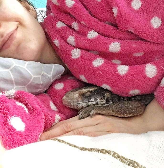 Холоднокровное, но любящее животное: степной варан – отличный домашний питомец