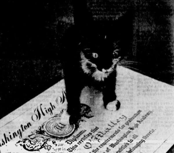 И днем и ночью кот ученый: 7 животных с высшим образованием