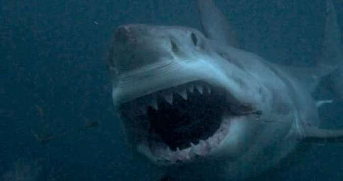 10 легендарных акул-людоедов