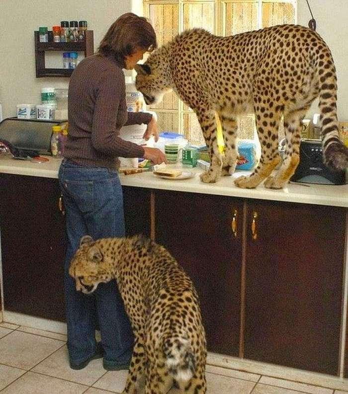 Когда обычных домашних животных становится уже мало