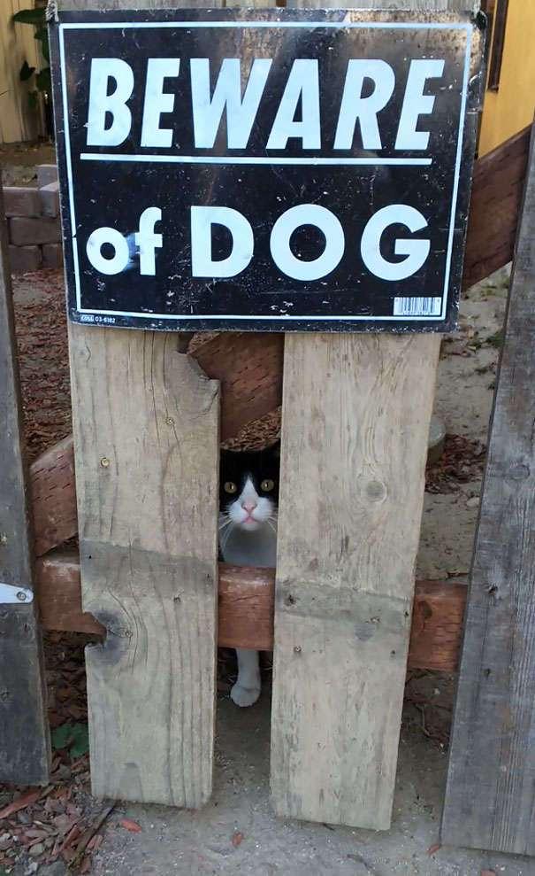 Осторожно! Злая собака!