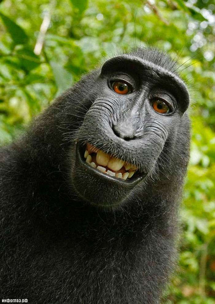 Эффект сотой обезьяны