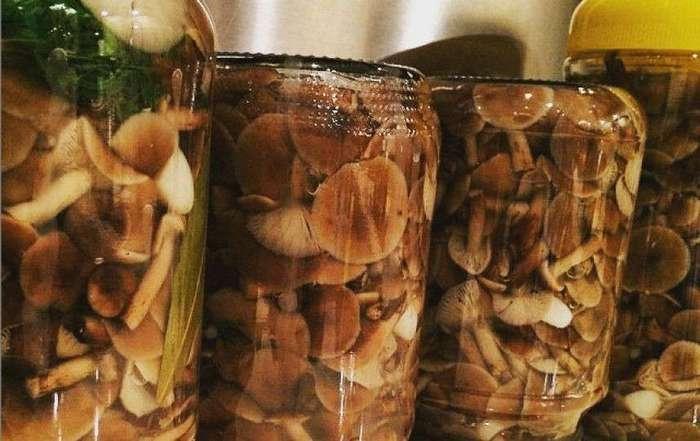 Кто из знаменитостей собрал больше всех грибов?