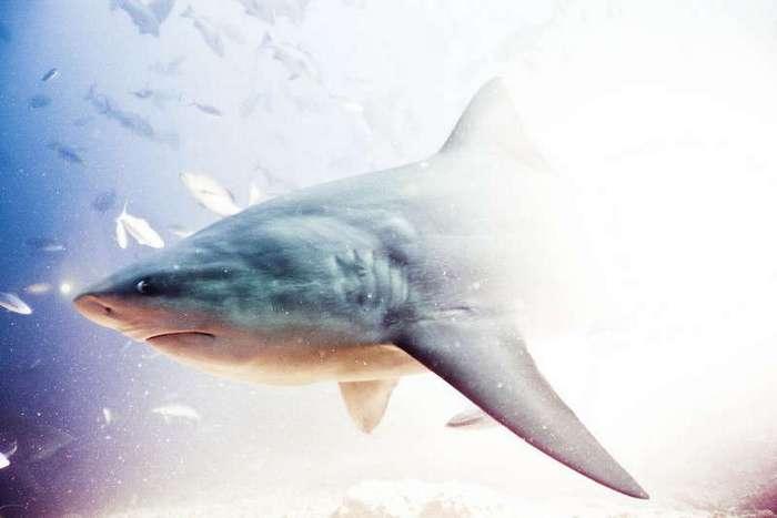 Удивительные снимки с акулами, сделанные голливудским фотографом