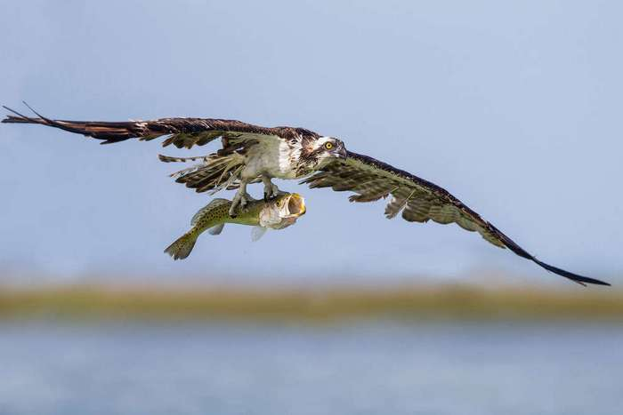 Птичий конкурс Audubon Photography Awards 2016