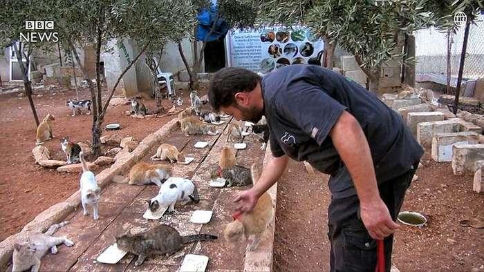 «Человек-кот из Алеппо» остался в разрушенном войной городе, чтобы ухаживать за домашними питомцами
