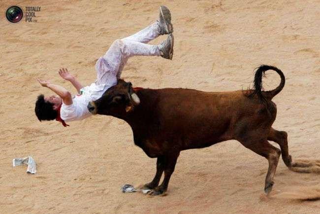 Месть быков