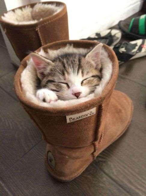 30 классных котиков, которые где хотят, там и спят
