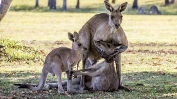 Самые жестокие убийцы, рожденные природой