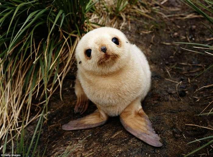 Невозможно сдержать улыбку: где обитают самые умилительные детёныши животных в мире
