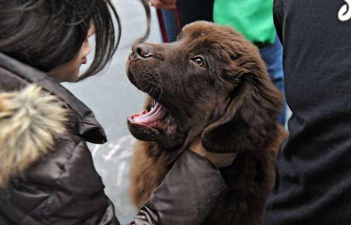 Собаки помогут пассажирам московских аэропортов бороться со стрессом