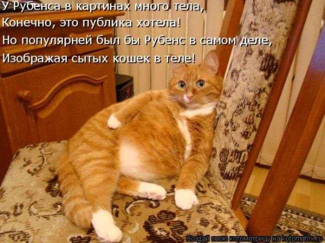 Классные картинки от сайта Котоматрица