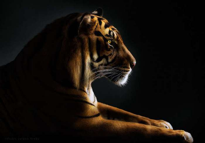Портреты диких животных