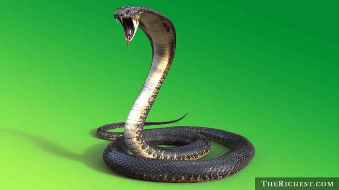 15 тревожных фактов о змеях, которые вы предпочли бы не знать