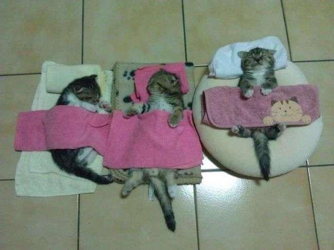 Наши любимые сплюшки
