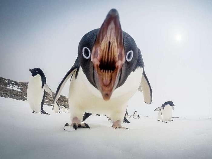 Сумасшедшие фотографии животных, которые точно вас удивят