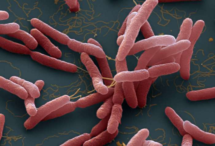 Из тропиков выходит новая смертельная инфекция – мелиоидоз