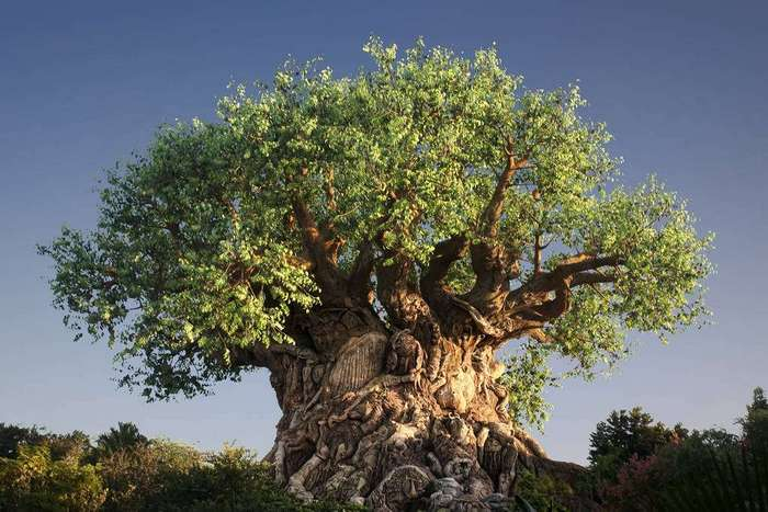 Новый гаджет превратит покойников в деревья
