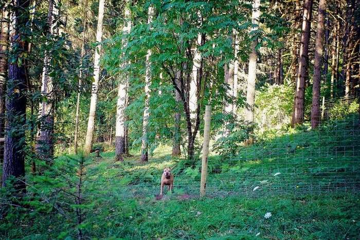 Собачий приют строит для псов частные коттеджи