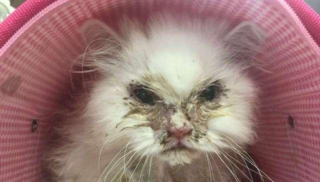 Ветеринары признались, что никогда не видели ничего подобного... Он выжил!