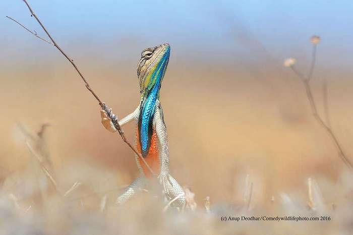 Eщё 22 несерьёзных фотошедевра конкурса 2016 Comedy Wildlife Photography Awards