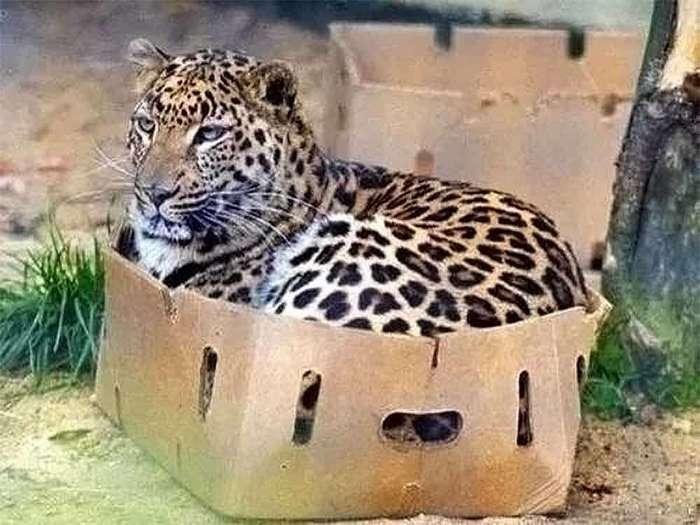 Размер не имеет значения: кошки всегда остаются кошками