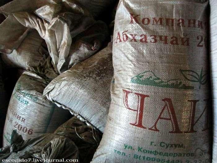 Как производят чай в Абхазии