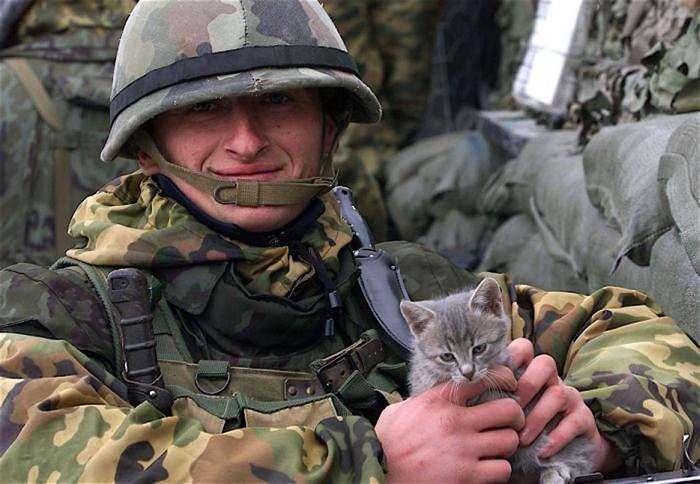 Военные коты